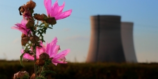 Flower Next to Nuclear Power Generator