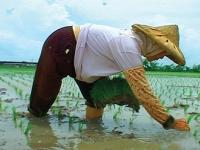 Let It Be: The Last Rice Farmers 無米樂